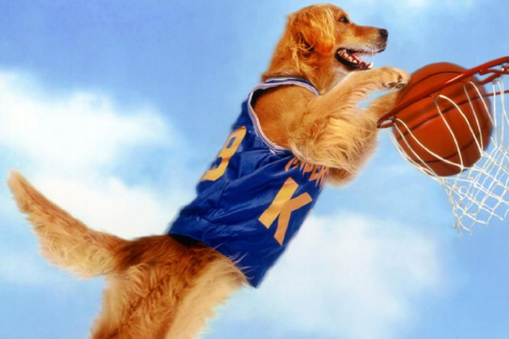 air bud scoring a basket